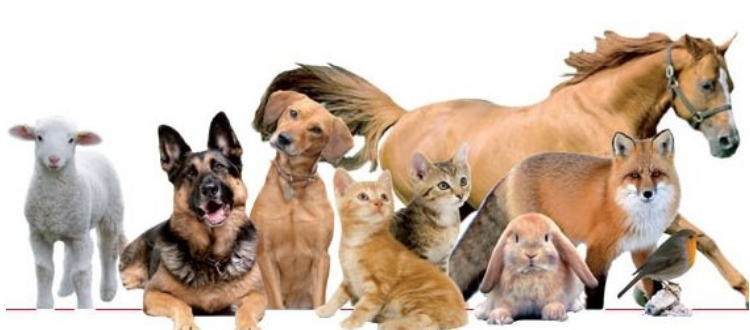 PERCORSI DI FORMAZIONE SUL BENESSERE ANIMALE